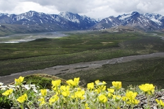 Denali State Park